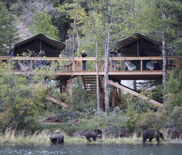 bear-camp-high-res