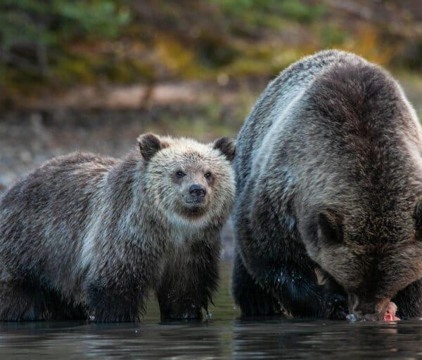 bearcamp1